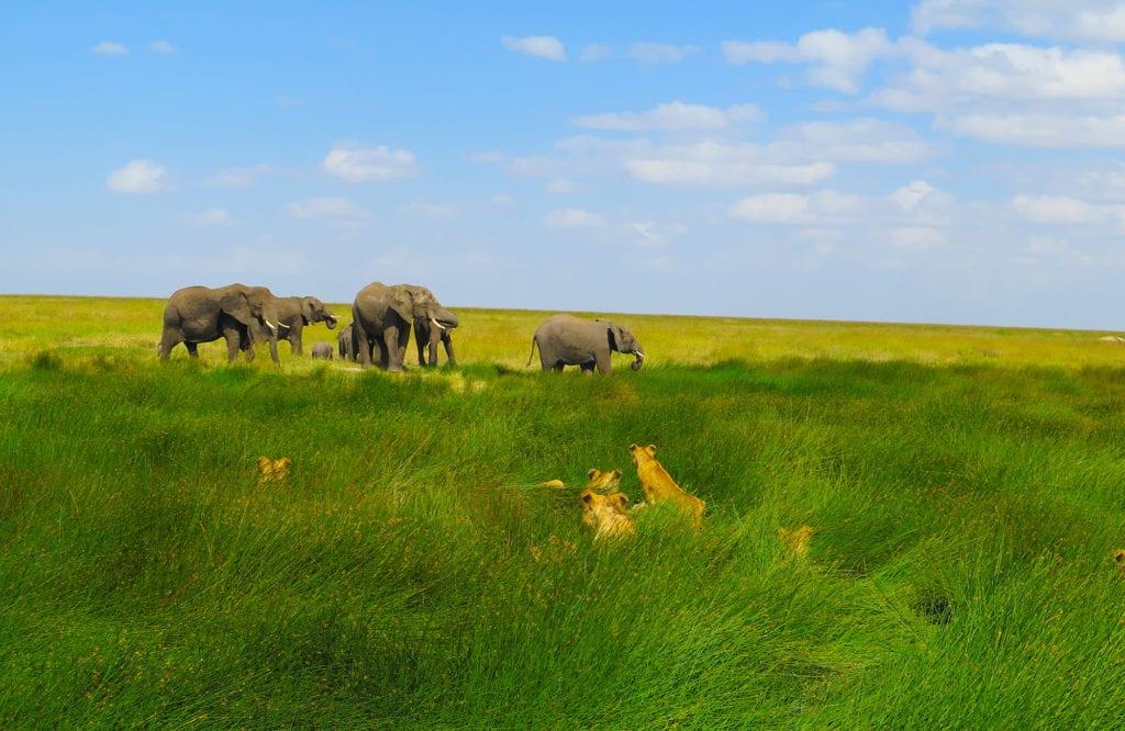 moondance best of safari photo