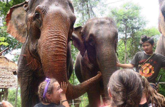 elephant sanctuary with moondance