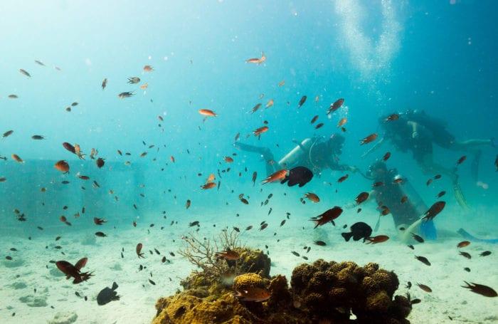 scuba certification in thailand moondance