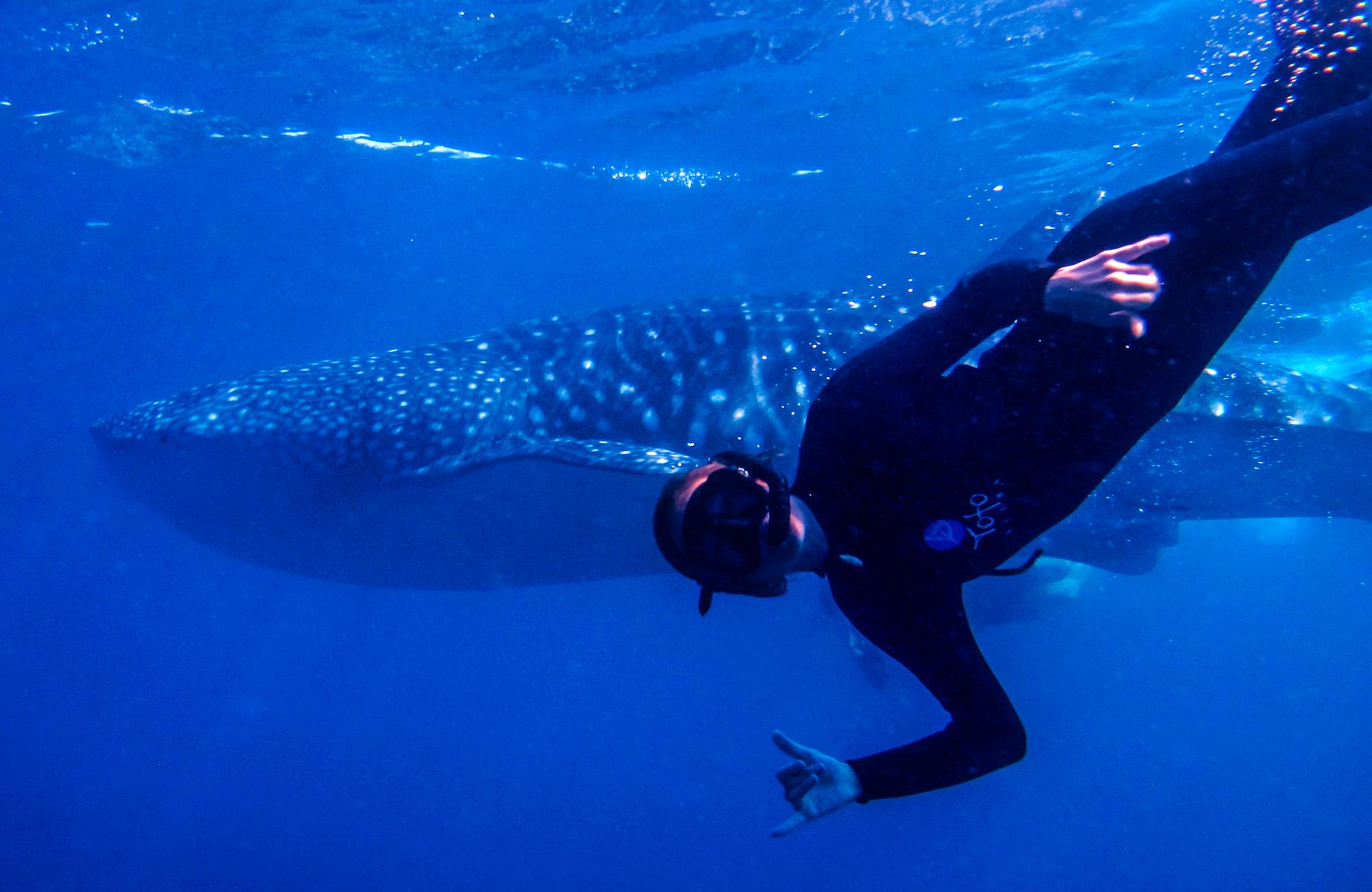 Whale Shark on Moondance Adventures